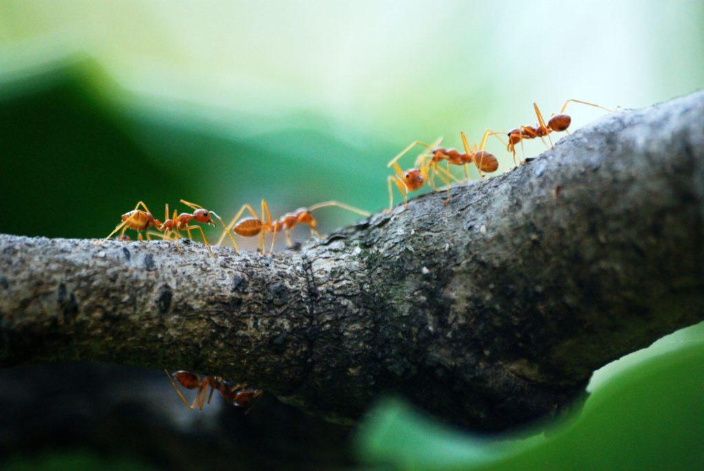 schutz vor insekten und ameisen